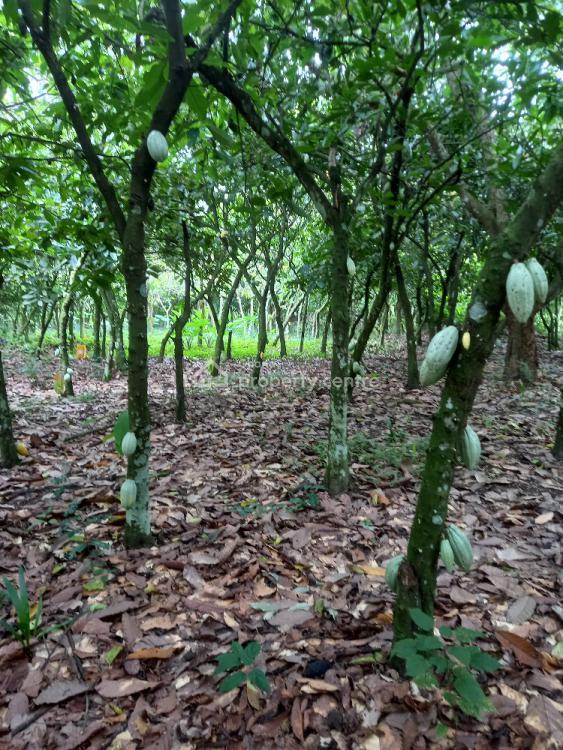 Cocoa Farm, Kroase ( Kwaso) Off Ejisu/kuntenase Road, Ejisu-juaben Municipal, Ashanti, Tank Farm for Sale