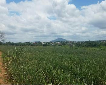 Registered 8 Acres Farm Land, Ahodwo - Nsawam, Ahodwo - Nsawam, Akuapim South Municipal, Eastern Region, Mixed-use Land for Sale
